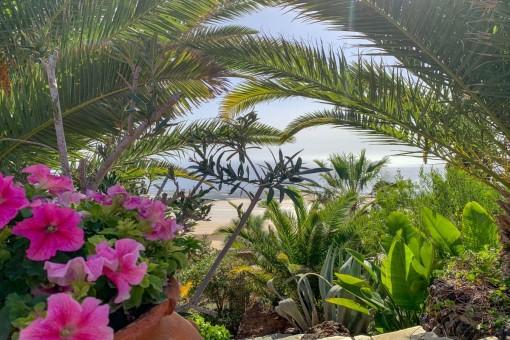 Garden and sea view