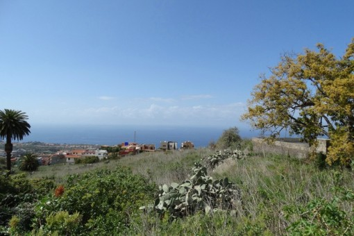 Opportunity: 8000 m2 sea view finca with two building plots in La Victoria de Acentejo
